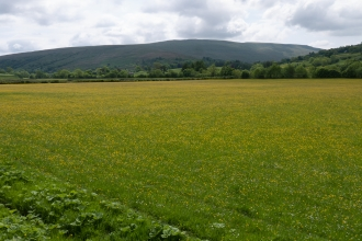 Northern hay meadow