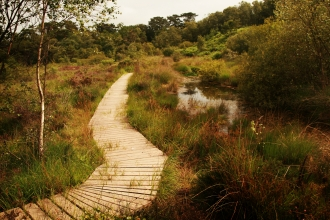 Improved boardwalk at Bystock Pools nature reserve