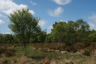 Trees growing at Chudleigh Knighton Heath