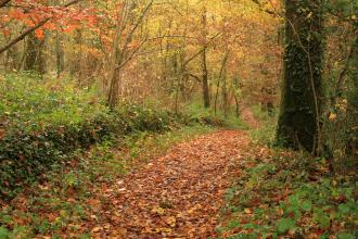 Halsdon path in the Autumn