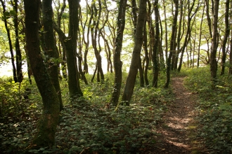 A path passes through trees at Warleigh Point nature reserve