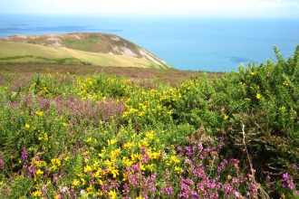 Heather and gorse overlooking the coast