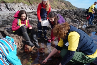 Rockpooling at Wembury beach with Wembury Marine Centre