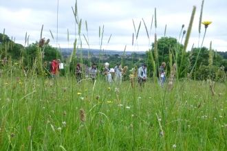 Whitycombe botany workshop with Exeter local group