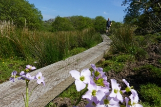 Boardwalk across Emsworthy Mire with pink flower in foreground
