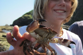 Seaton Jurassic rockpool ramble child with crab