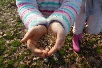 Child's hands holding seeds