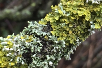 Lichen covered branch