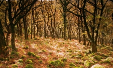 Dart Valley woodland in autumn