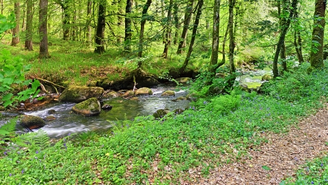 River Webbern flowing through Blackadon nature reserve.