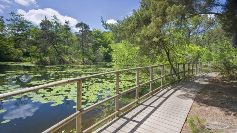 Board walk at Bystock Pools nature reserve