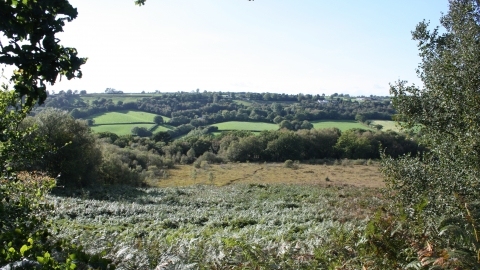 Clayhidon Turbary nature reserve