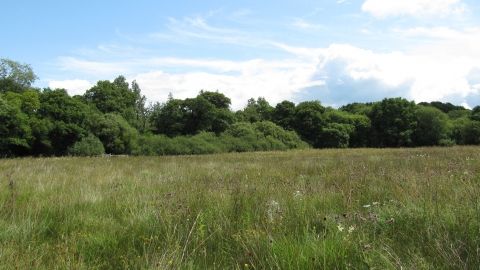 Grasses growing at Ash Moor
