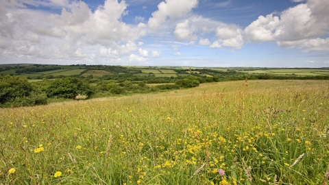 View across Culm wild flower meadow at Volehouse Moor nature reserve