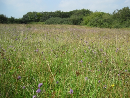 Culm  grassland at Volehouse