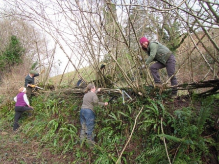 Hedgelaying at Donkey Sanctuary with Devon Greater Horseshoe Bat Project