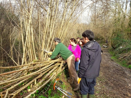 Hedgelaying with Active Neighbourhoods