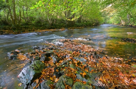 Autumn leaves in the river Teign at Dunsford nature reserve