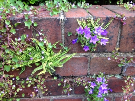 Wild plants growing out of a brick wall