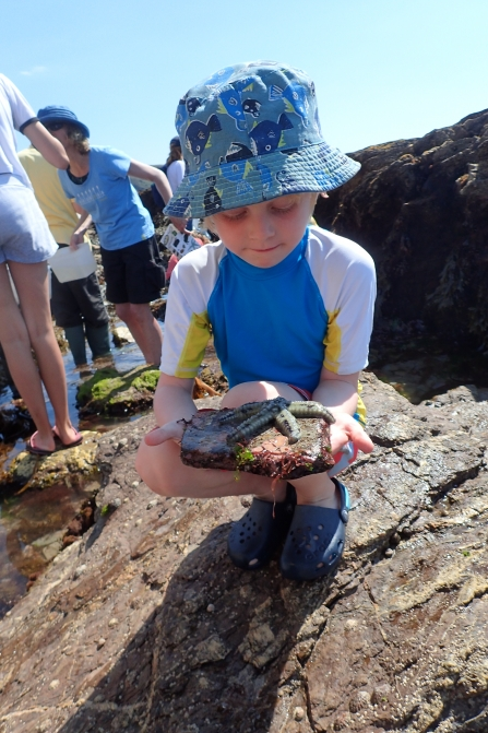 Boy and a spiny starfish at Wembury