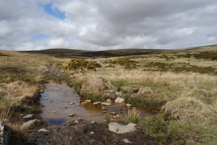 Stream at Postbridge on Dartmoor