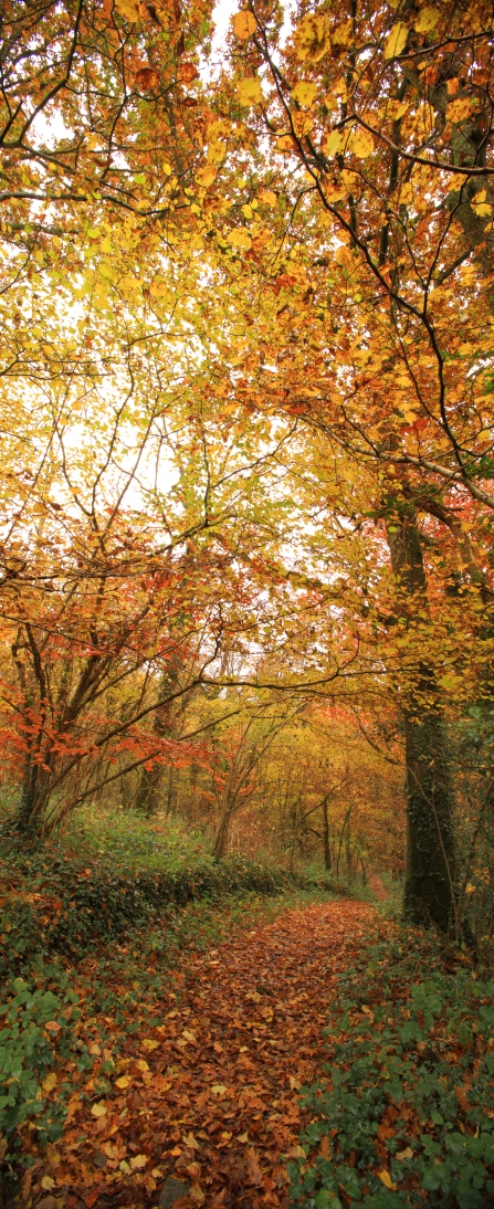 Autumn trees at Halsdon