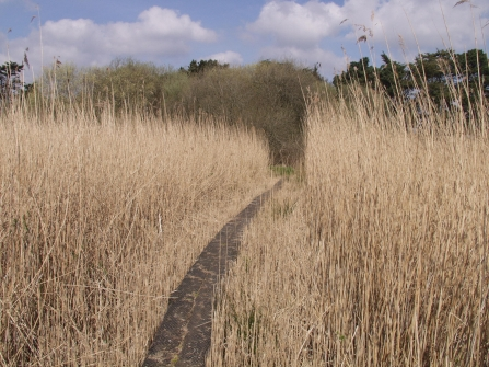 Path through DWT Old Sludge Beds nature reserve