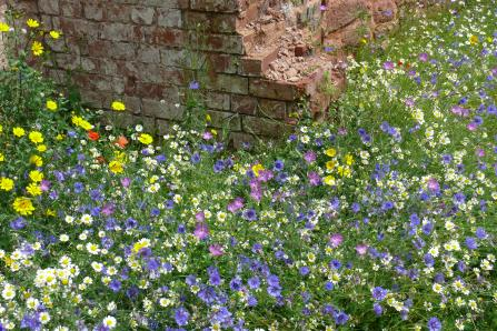 Variety of wildflowers growing at Cricklepit Mill