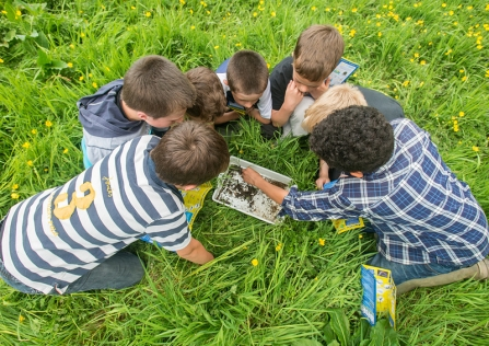 Children looking at insects in a tray