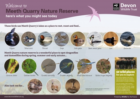 Wildlife you might see at Meeth Quarry nature reserve