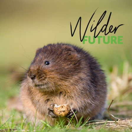 water vole social media with wilder future logo