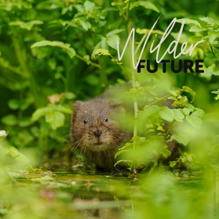 Water vole through leaves