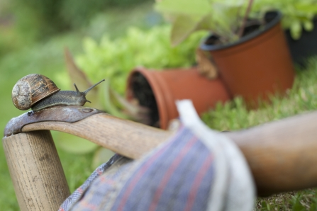 Gardening with wildlife, snail on gardening gloves with pot plants behind