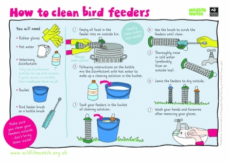 clean your bird feeders