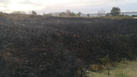 Charred remains of area of gorse at nature reserve