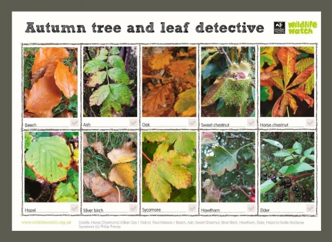 Autumn tree and leaf detective spotter sheet