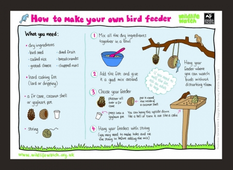 How to make your own bird feeder activity sheet