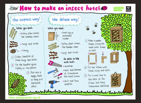 Make an insect hotel activity sheet